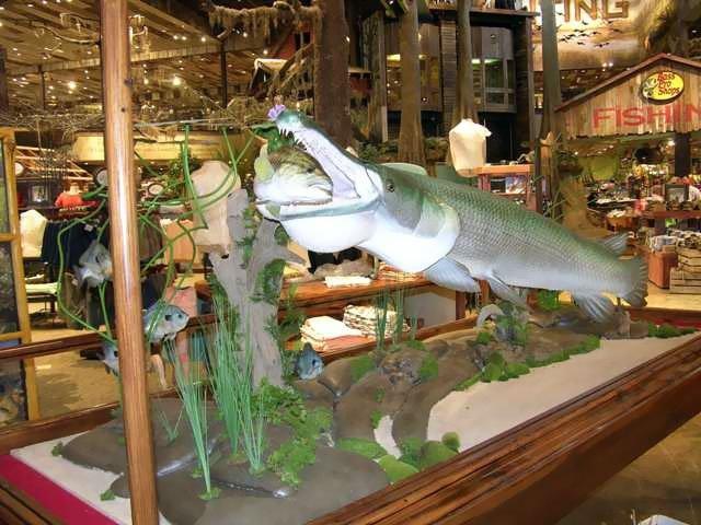 Alligator Gar Mount