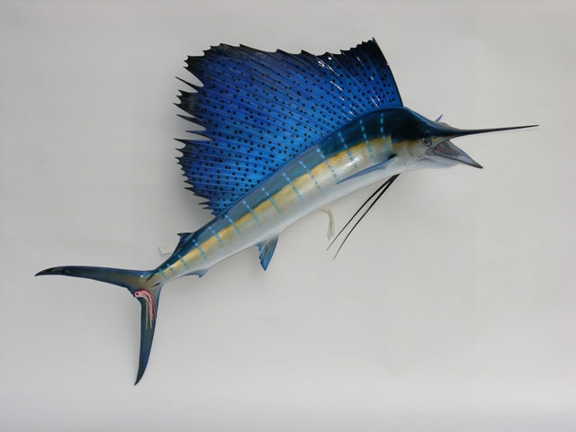 Atlantic Sailfish Mount