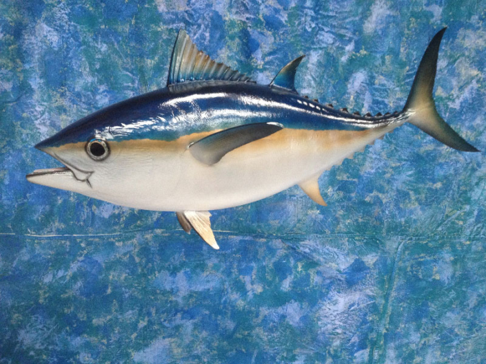 Blackfin Tuna Mount