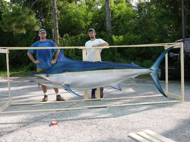 Black Marlin Mounts