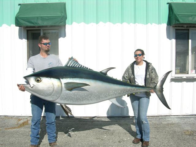 Bluefin Tuna Mount