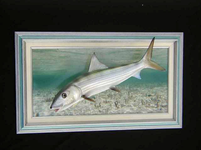 Bonefish Mount