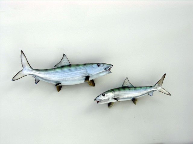 Bonefish Mounts