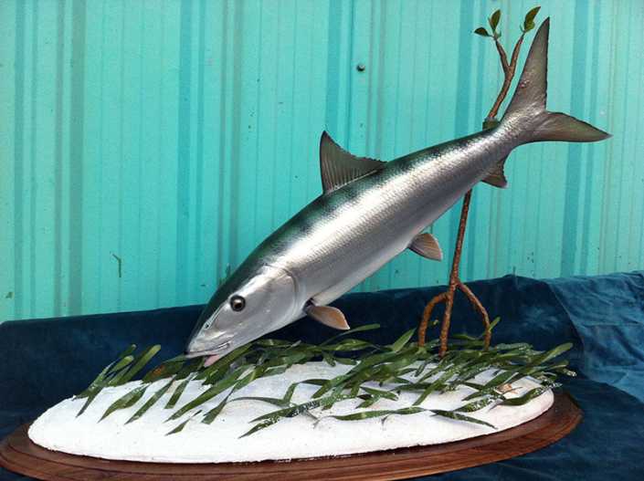 Bonefish Taxidermy