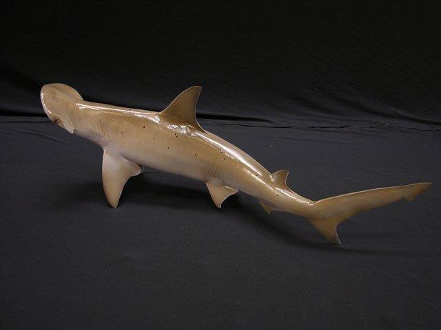 Bonnethead Shark Mount