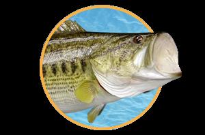 Freshwater Fish Mounts