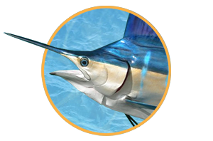 Fish Taxidermy