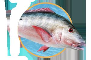 Saltwater Fish Taxidermy