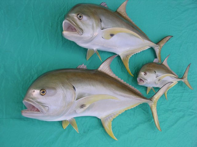 Crevalle Jack Mounts