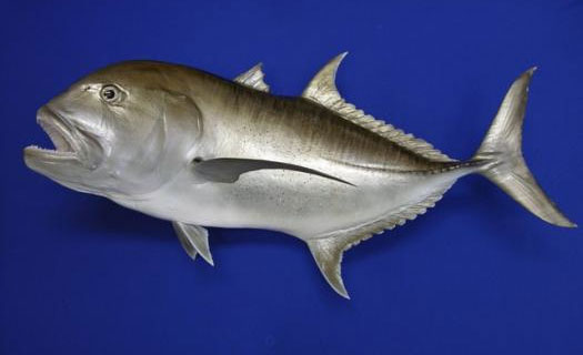 Giant Trevally Mounts