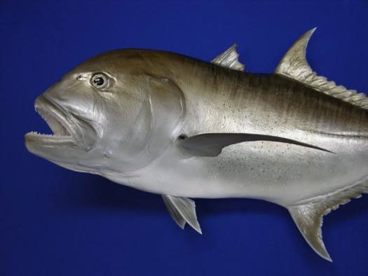 Giant Trevally Mount