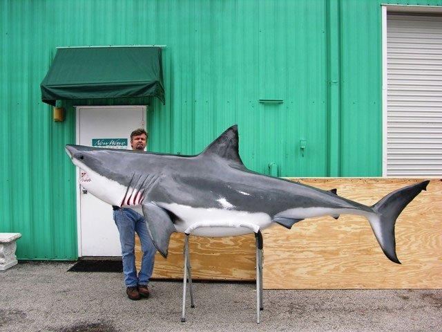 Great White Shark Mount