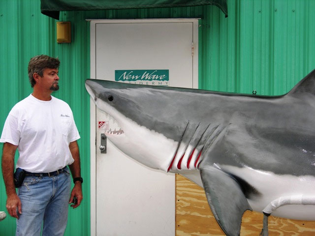 Great White Shark Taxidermy