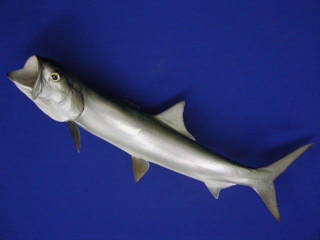 Ladyfish Replica