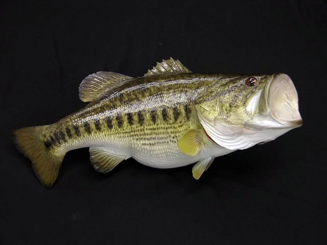 Largemouth Bass Replicas