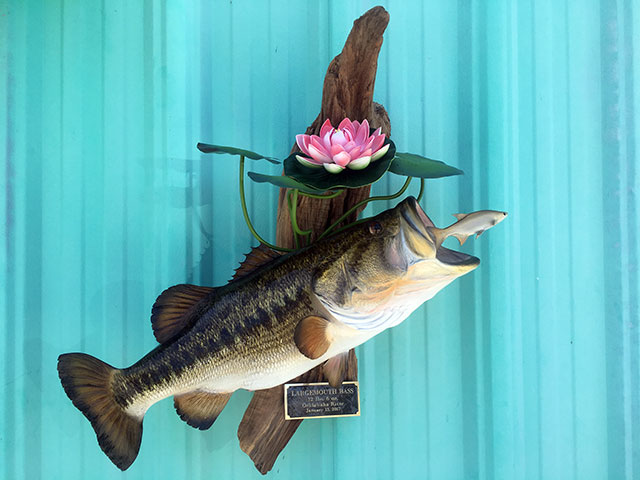 Largemouth Bass Replica