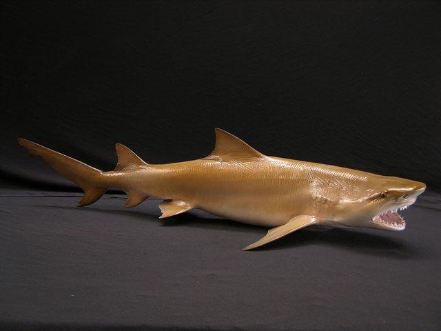 Lemon Shark Mounts