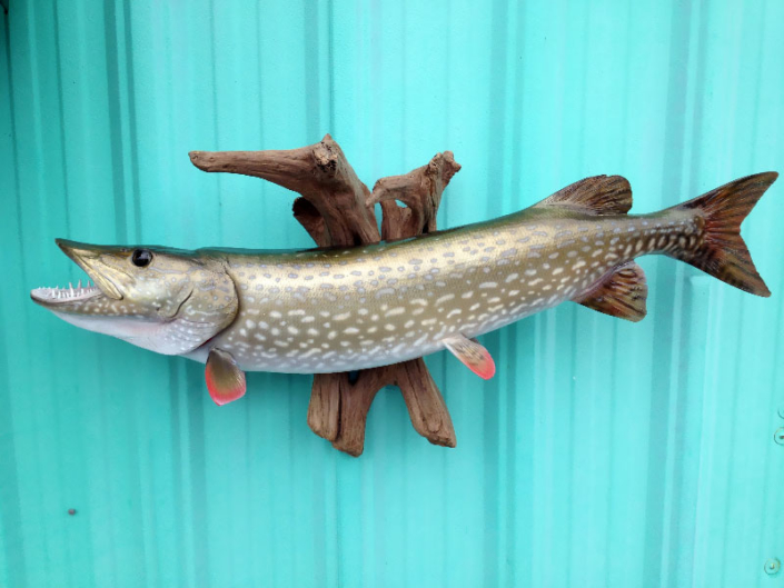 Northern Pike Mounts