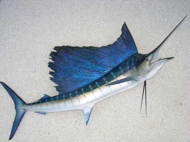 Pacific Sailfish Mounts
