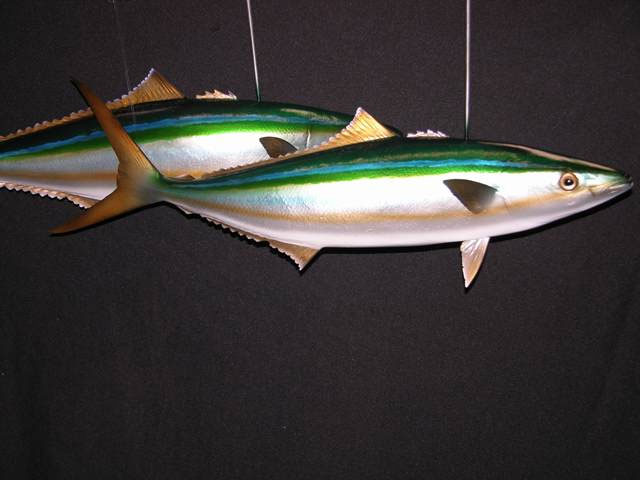 Rainbow Runner Mounts