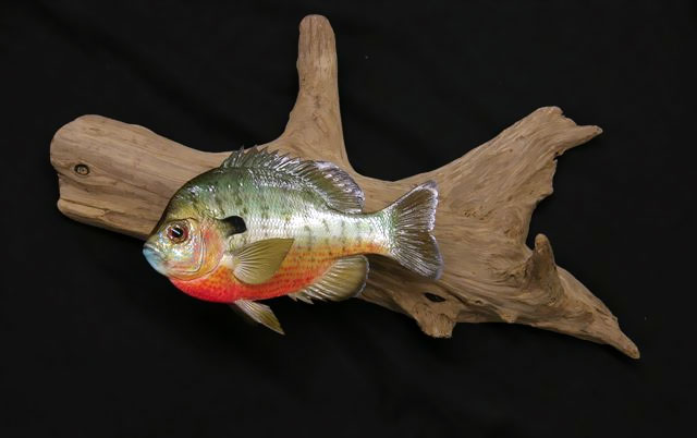 Redbreast Sunfish Mounts