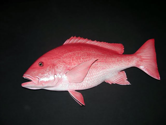Red Snapper Replica