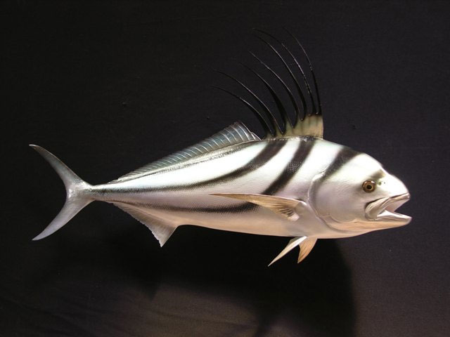 Roosterfish Mounts