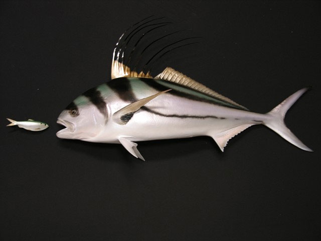 Roosterfish Mount
