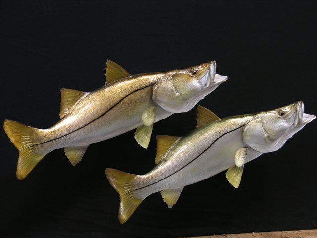 Snook Mounts