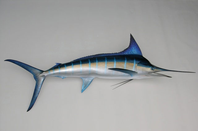 Striped Marlin Mounts