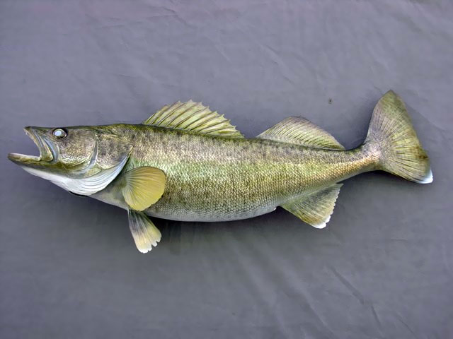 Walleye Mount