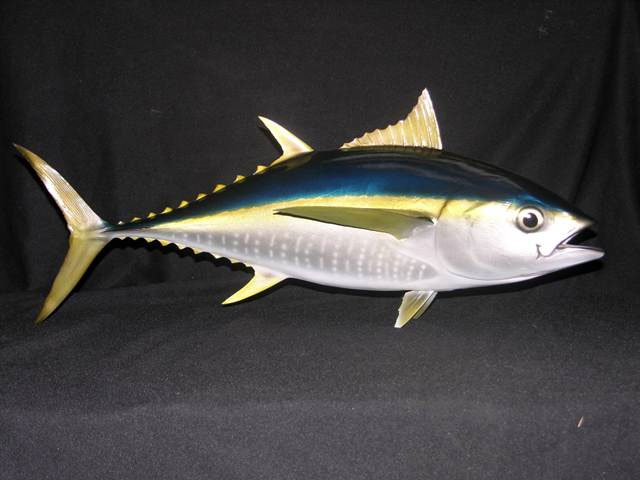 Yellowfin Tuna Mount