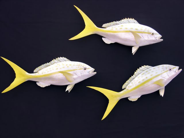 Yellowtail Snapper Mount