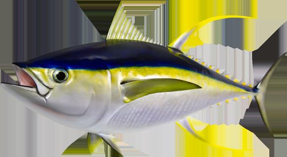 Tuna Taxidermy