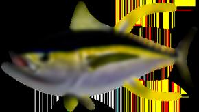Tuna Replica