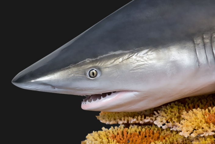Shark Replica Mount