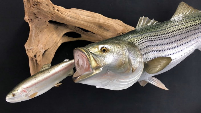 Striped Bass Replica