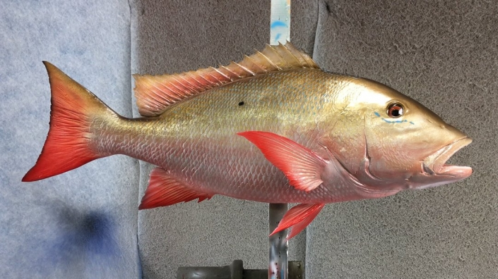 Mutton Snapper Mount