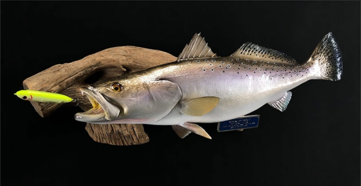 Speckled Trout Trophy