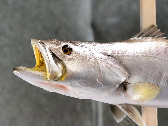 Speckled Trout Replica Mount