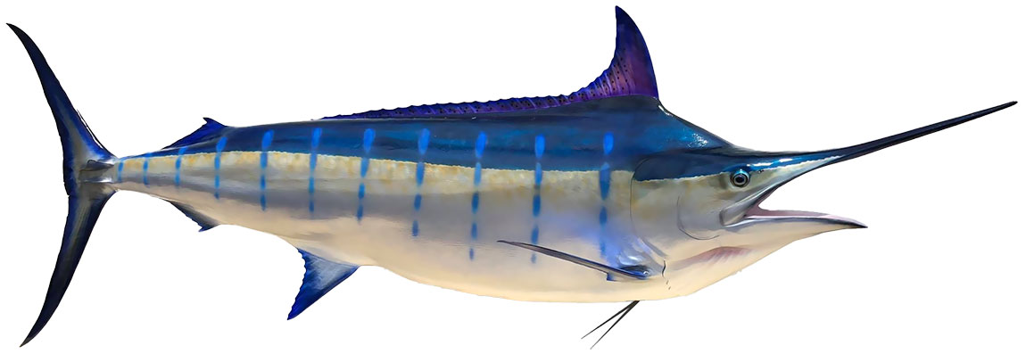 Blue Marlin Mount