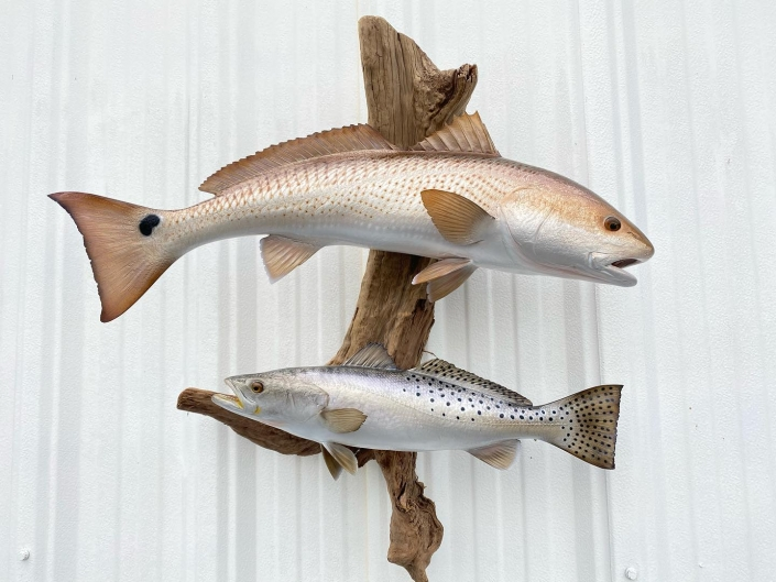 Redfish & Speckled Trout