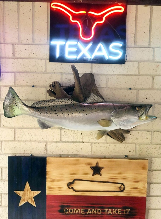 Texas Speckled Trout Mount
