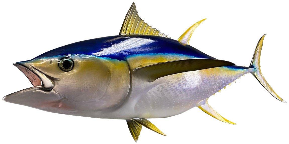 Yellowfin Tuna Mount